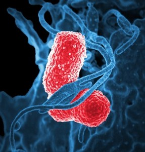 bakterija Klebsiella pneumoniae