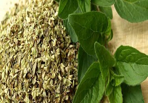 Oil-of-Oregano-Benefits-2