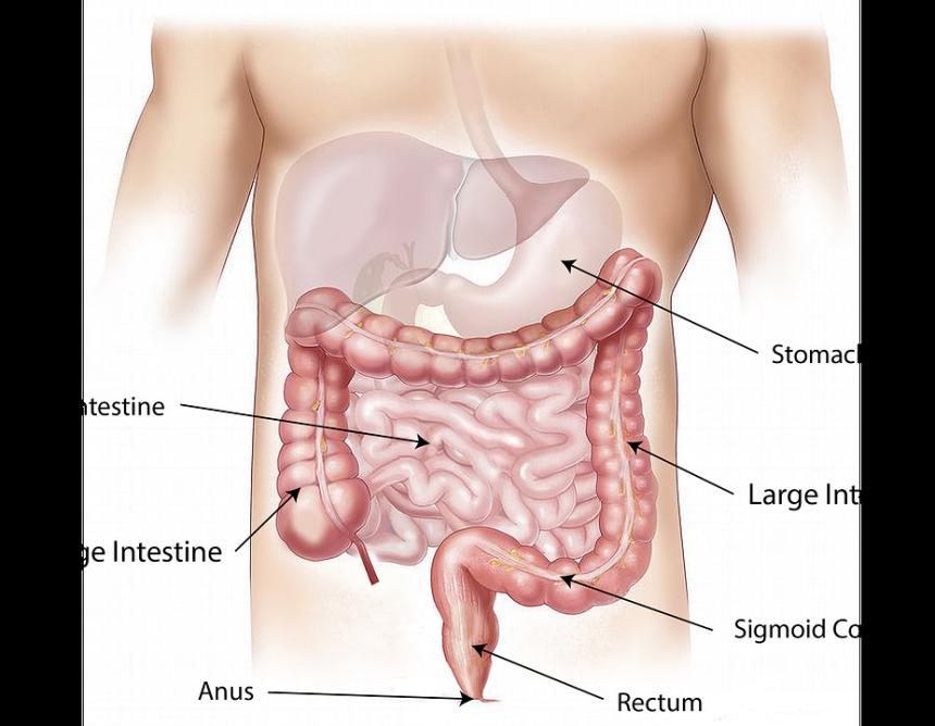 sistem-organa