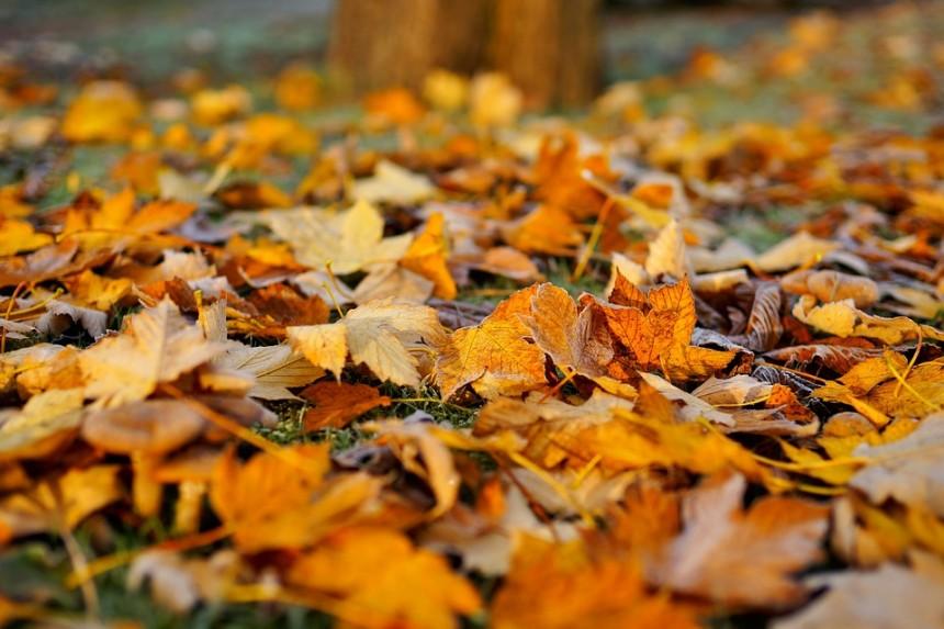 leaves-1818625_960_720