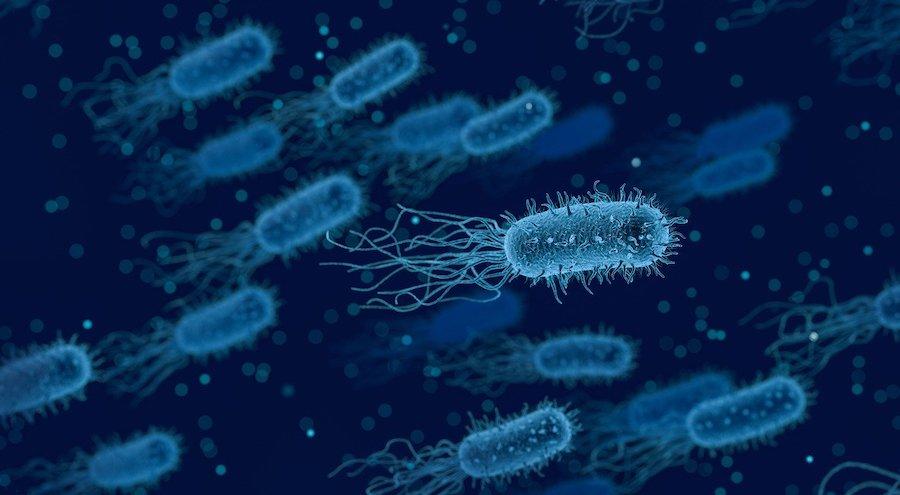Shigella (šigela) – simptomi, dijagnostifikovanje i lečenje